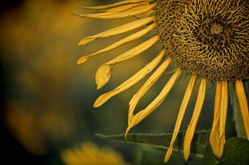 Domsky_Katherine_11x14_.fading_sun